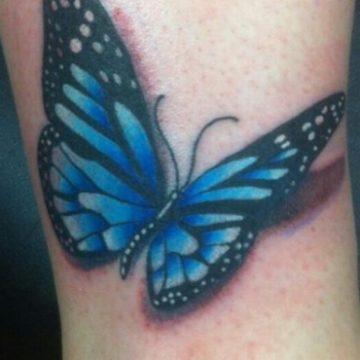 butterfly-670×370